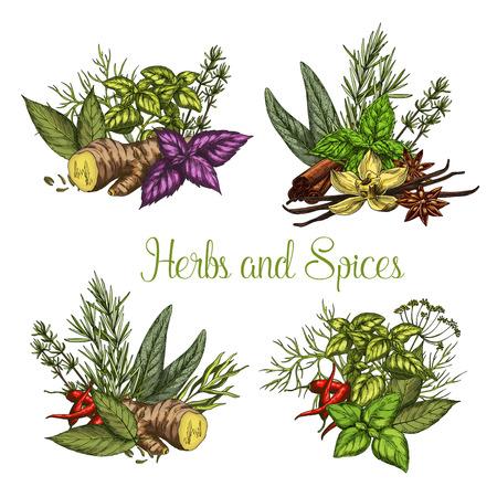 Vector spices and herbs seasonings sketch