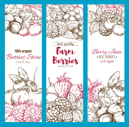Vector banners of fresh garden berries sketch