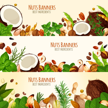 Vector banners of nuts and fruit seeds