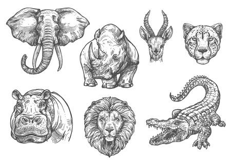 Szkic wektor zoo dzikie zwierzęta afrykańskie ikony