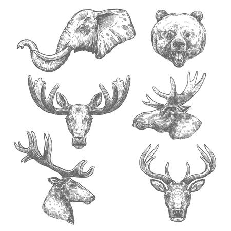 Dierlijke schets set van Afrikaanse en bos zoogdier Stock Illustratie