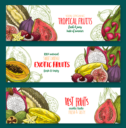 Exotic fruit sketch banner set of tropical berry Stock Vector - 88065449