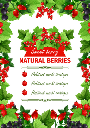 Berry, sweet fruit, natural food banner template Çizim