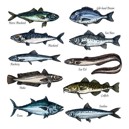 Vis, schaal-en schelpdieren schets set met zee, oceaan dier Stock Illustratie