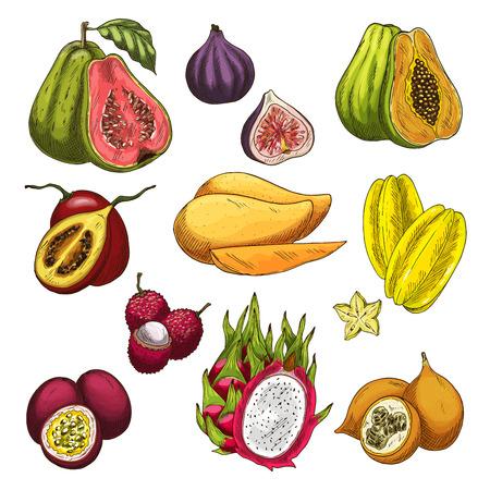 Exotic fruit tropical farm product sketch set Иллюстрация