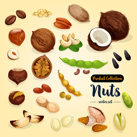 Nut, bean and seed vector set, superfood design Stok Fotoğraf - 88065712