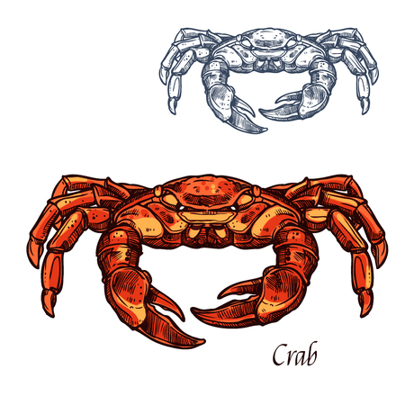 Crab sea animal isolated sketch for sefood design