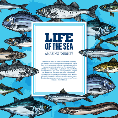 Sea life poster with ocean fishes of marlin, trout or flounder and salmon, underwater marlin, eel or tuna and mackerel with anchovy fishes for oceanarium or zoo vector sketch design Ilustração