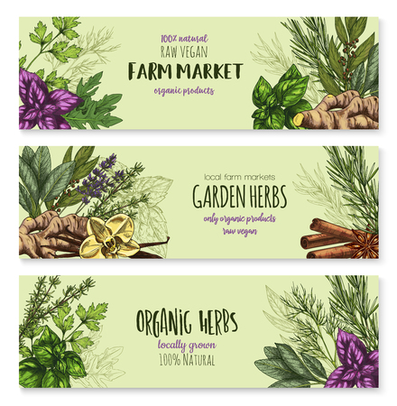 Herbs and spices seasonings of bay leaf, arugula or cinnamon, basil or farm grown oregano and ginger, cinnamon or vanilla and tarragon, rosemary or peppermint. Vector banners sketch for spice market