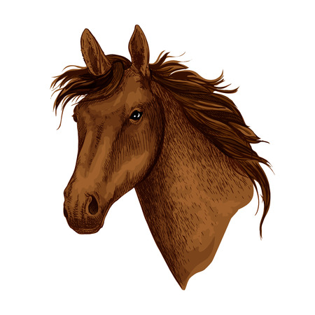Horse or brown mustang head with wavy mane. Wild equine animal muzzle or racehorse trotter for sport team mascot or stallion for equestrian contest or horse races and exhibition. Vector isolated icon Illustration