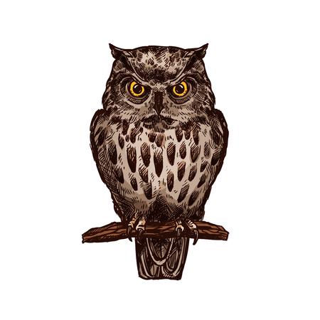 Uil of adelaar-uil vogel schets vector geïsoleerde pictogram. Wilde bos bevederde nachtelijke roofzuchtige roofvogelzitting op tak. Wildlife fauna en zoölogie symbool voor dierentuin natuur avontuur club Stock Illustratie