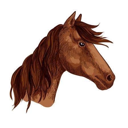 말 또는 경주마 동물 머리와 갈기 갈기. 갈색 말 mustang 총구 야생 동물 또는 국내 종마 또는 말 스포츠 또는 승마 경주 대회 또는 팀 마스코트. 벡터 격