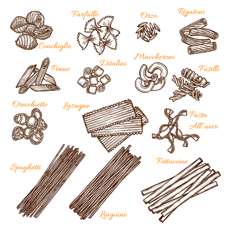 Italian pasta sorts sketch icons. Vector isolated set of conchiglie, farfalle or orzo macaroni, durum rigatone or penne and ditalini, hand crafted maccheroni or fusilli and orecchiette with lasagne