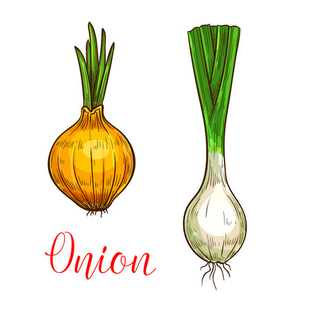 Onion leek sketch icon. Vector isolated symbol of fresh garlic, scallion or farm grown vegetarian shallot and chives vegetable root and sprout for veggie salad or grocery store and market design Stok Fotoğraf - 88337984