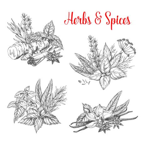 ハーブとスパイスは房スケッチ アイコンです。唐辛子やオレガノまたは緑のバジル、ディル、パセリの調味料とタイムやクミン風味、セージ ベイリ