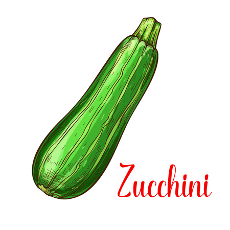 Zucchini squash sketch icon. Vector isolated symbol of fresh courgette marrow farm grown vegetarian vegetable fruit for veggie salad or grocery store and market design