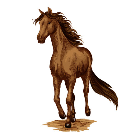 Horse animal running stallion racehorse vector icon