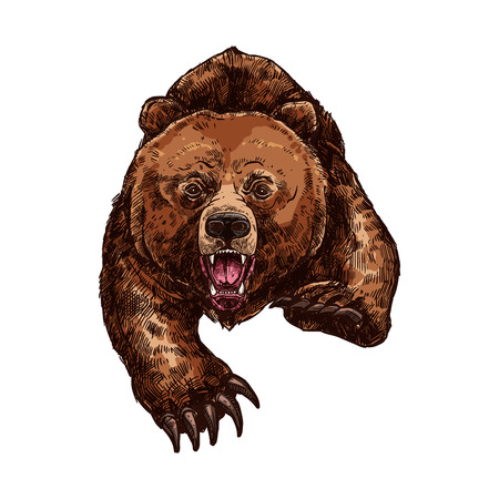 Grizzly bear roaring vector isolated sketch animal Vettoriali