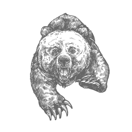 Bear attack isolated sketch of aggressive animal 일러스트