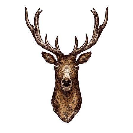 야생 숲 동물의 사슴, 엘크 또는 사슴 스케치