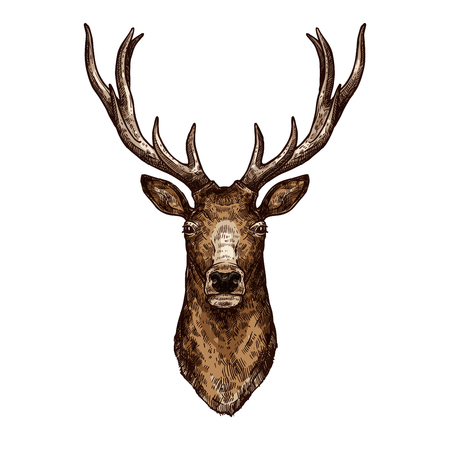 Deer, elk or reindeer sketch of wild forest animal