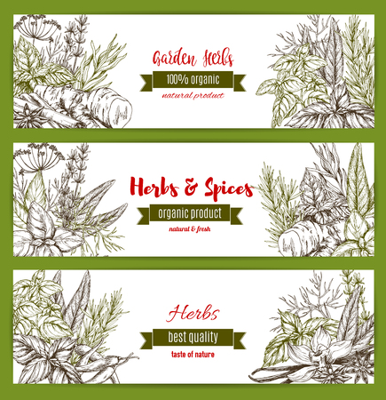 Vector templates set for spice and herbs market. Illustration