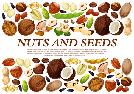Vector poster of nuts and fruit seeds.
