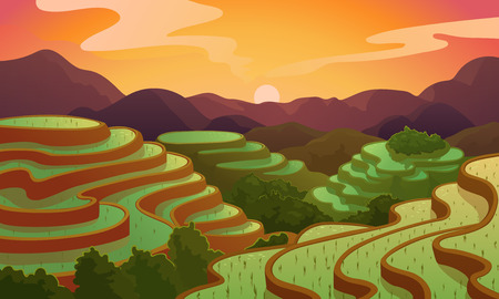 Vector landscape rice Chinese field terrace.