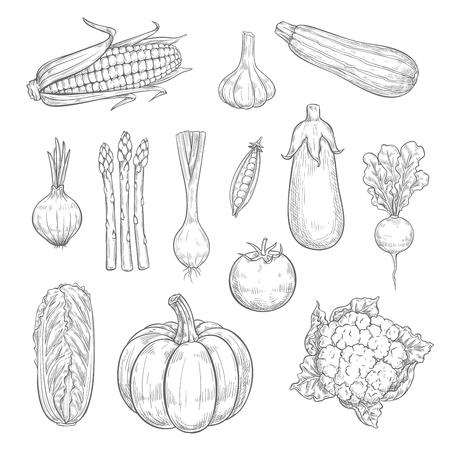 ベクトル野菜や野菜収穫スケッチ アイコン