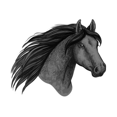 Horse animal muzzle vector sport sketch icon