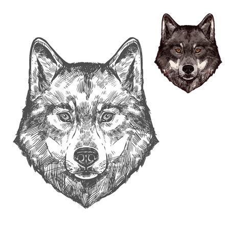 Wolf muzzle vector isolated sketch animal
