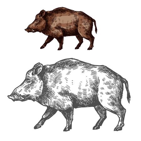 Boar aper museau vecteur croquis animal sauvage Vecteurs