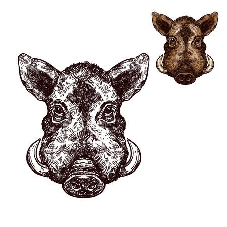 Boar aper muzzle vector sketch wild animal
