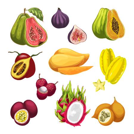 エキゾチックな熱帯フルーツの図のセットです。