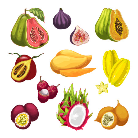 Set of exotic and tropical fruit  illustration.