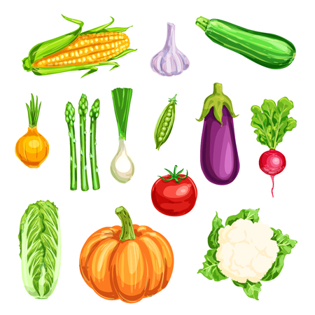 Vegetable watercolor icon of organic farm product.