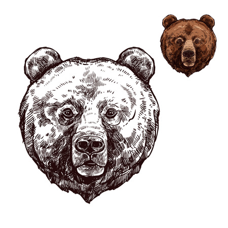 Bear or grizzly animal sketch of wild predator 向量圖像
