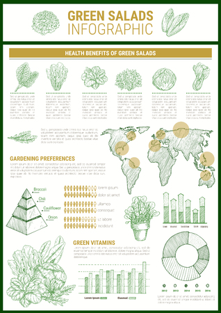 Salad greens infographic template. Leaf vegetable health benefits chart and vitamin content graph. Cultivation preferences map and pyramid diagram with lettuce, basil, spinach and arugula. Illustration