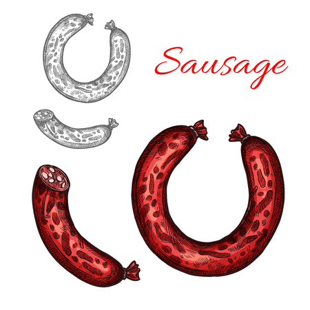 肉のポーク ソーセージ分離スケッチ。スモーク ソーセージまたはフランクフルト ソーセージ、にんにく、肉屋店食品包装ラベルまたはバーベキュ