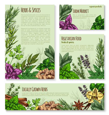 Herb and spice sketch banner of natural seasoning Illustration