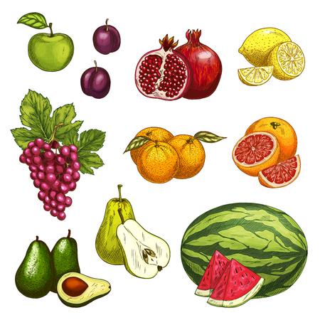 음식 디자인을위한 신선한 달콤한 베리의 과일 스케치