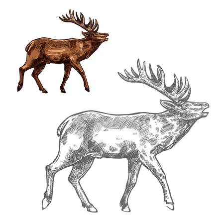 Roaring deer sketch animal with large antlers