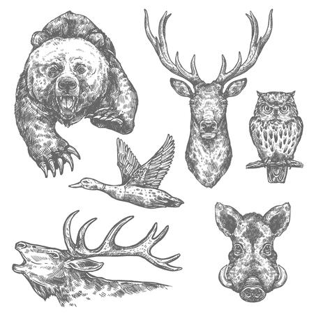 Bosquejo aislado de aves y animales salvajes con oso y ciervo, alce y búho, jabalí, alce y pato. Carnívoro y animal herbívoro para el diseño de temas de caza deportiva, zoológico y vida silvestre de bosques.