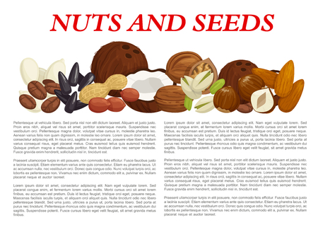 Nuts and fruit seeds or kernels information poster template on nutrition facts. Vector design of almond, filbert or peanut and walnut, pistachio or pumpkin and sunflower seeds, coconut or hazelnut nut Фото со стока - 92745156