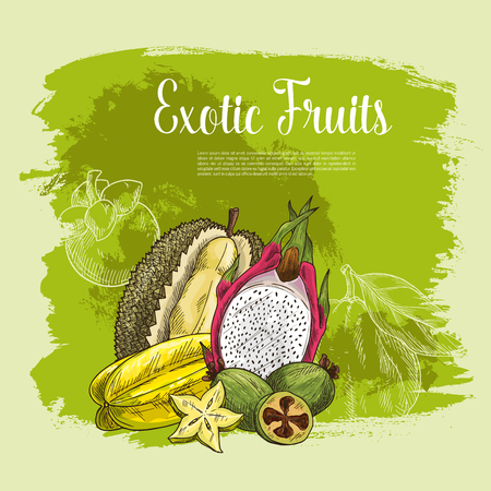Fresh exotic fruits poster for fruit shop. Vector harvest of tropical durian, carambola star fruit or feijoa and juicy dragon fruit pithaya, mangosteen or rambutan and citrus grapefruit or pomelo.