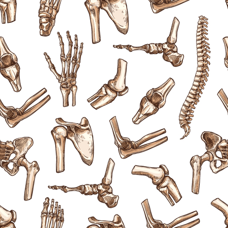 Human joints and body parts bones seamless pattern. Vector sketch spine pelvis, leg knee or shoulder scapula and elbow, arm and hand wrist with fingers or foot ankle for medical anatomy background.