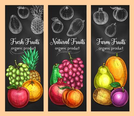 Las frutas frescas dibujan pancartas de uva, manzana o pera y naranja, piña tropical o granate y ciruela. . Vector de diseño de cosecha de la granja de kiwi exótico, mango o papaya, melocotón o melón y mandarina. Foto de archivo - 92747872