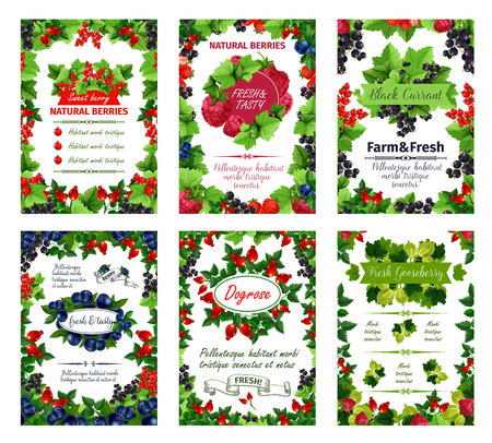 Fresh natural berries posters of garden red currant, dog-rose berry fruit or blackcurrant and raspberry, organic forest cranberry or cherry and blueberry. Vector harvest for farm market or juice.
