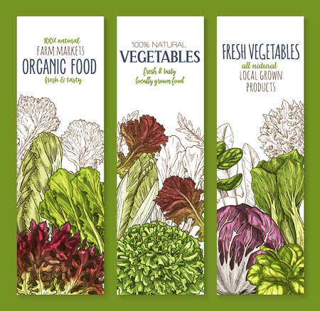 サラダグリーンの葉野菜スケッチバナーセット  イラスト・ベクター素材