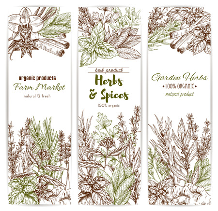 Herb and spice sketch banner of organic culinary seasoning. Thyme, rosemary and basil, cinnamon, vanilla and ginger, parsley, dill and bay leaf, anise star, sage and oregano spice shop label design.
